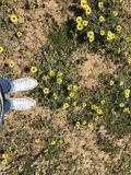 Kwiatu dzień Zdjęcia Stock