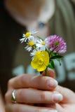Kwiatu dziki bukiet Obrazy Royalty Free