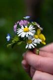 Kwiatu dziki bukiet Obraz Royalty Free