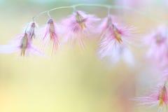 kwiatu dziki różowy Zdjęcie Royalty Free