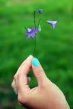 Kwiatu dzwon w ręce Zdjęcia Royalty Free