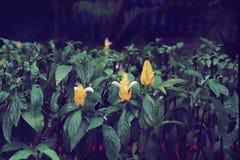 Kwiatu festiwalu czerni czarodziejka obraz royalty free
