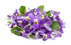 Kwiatu fiołek Zdjęcia Royalty Free