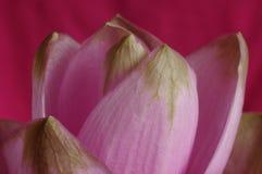 kwiatu fiołek Zdjęcie Stock