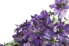 kwiatu fiołek Obraz Royalty Free
