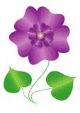 Kwiatu fiołek Zdjęcia Stock