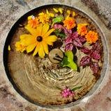 kwiatu fontain Zdjęcie Stock