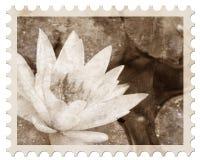 kwiatu fotografii rocznik Zdjęcia Stock