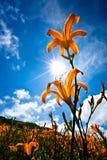 kwiatu góry kolor żółty Zdjęcie Royalty Free