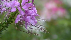 Kwiatu Garden zdjęcie wideo