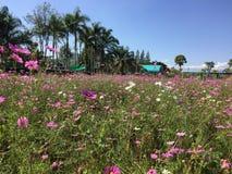 Kwiatu Garden obraz stock