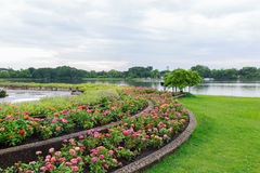 Kwiatu Garden fotografia royalty free