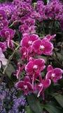 Kwiatu Garden Fotografia Stock