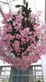 Kwiatu Garden Obrazy Royalty Free