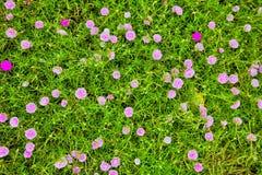 Kwiatu Garden Zdjęcie Stock
