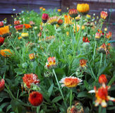 Kwiatu Garden Zdjęcie Royalty Free