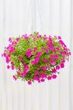 Kwiatu garnek Obrazy Royalty Free