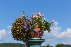Kwiatu garnek Zdjęcia Stock