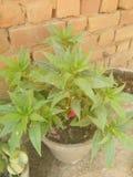 Kwiatu garnek Fotografia Stock