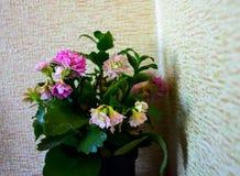 Kwiatu garnek blisko ściany Obraz Stock