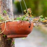 Kwiatu garnek na drzewie Obraz Stock