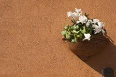 Kwiatu garnek na pomarańcze ścianie Zdjęcie Stock