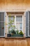 Kwiatu garnek z jedlinowymi drzewami zbliża okno Fotografia Royalty Free