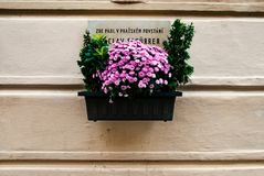 Kwiatu garnek z kartelem zdjęcia stock
