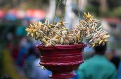 Kwiatu garnka czerwień z Unikalnym drzewem obraz royalty free