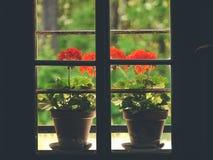 Kwiatu garnka projekta pomysły zdjęcia stock