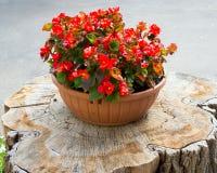 Kwiatu garnka stojaki na drzewnym fiszorku fotografia royalty free