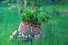 kwiatu gazonu garnek Obraz Royalty Free