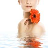 kwiatu gerber kobieta Zdjęcia Stock