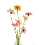 kwiatu gerbera Zdjęcia Royalty Free