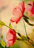 kwiatu grunge Obraz Royalty Free