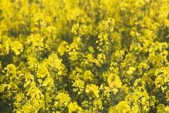 kwiatu gwałt zdjęcia royalty free