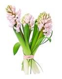 kwiatu hiacynt Zdjęcia Royalty Free
