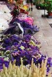 kwiatu Hong kok kong rynku mong orchidee zdjęcie royalty free