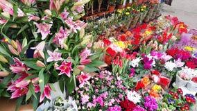 kwiatu Hong kok kong rynku mong orchidee Obrazy Stock