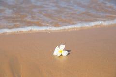 Kwiatu i oceanu fala Zdjęcie Stock