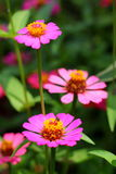 kwiatu insekt Obrazy Royalty Free
