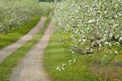 kwiatu jabłczany sad Zdjęcia Royalty Free