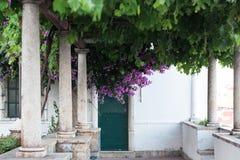 Kwiatu jacaranda zieleń drzewny Lisbon Portugalia miastowy Europe Obrazy Royalty Free