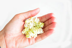 Kwiatu kaczora sztuczna girlanda na żeńskiej ręce Zdjęcie Stock
