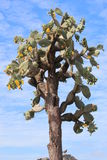 kwiatu kaktus zdjęcia stock