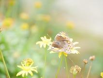 kwiatu kochanek Obraz Royalty Free