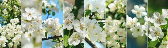 Kwiatu kolaż różnorodni typy drzewny okwitnięcie obraz royalty free