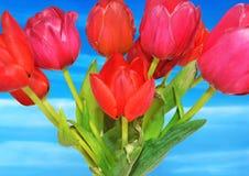 Kwiatu kolaż niebo kwiat - czerwoni tulipany - Obraz Royalty Free