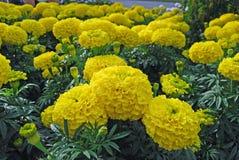 kwiatu kolor żółty Fotografia Stock