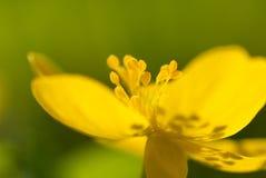 kwiatu kolor żółty Obraz Stock